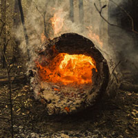 Burning log during NSW bushfire