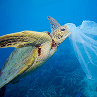 turtle and plastic bag © Troy Mayne / WWF