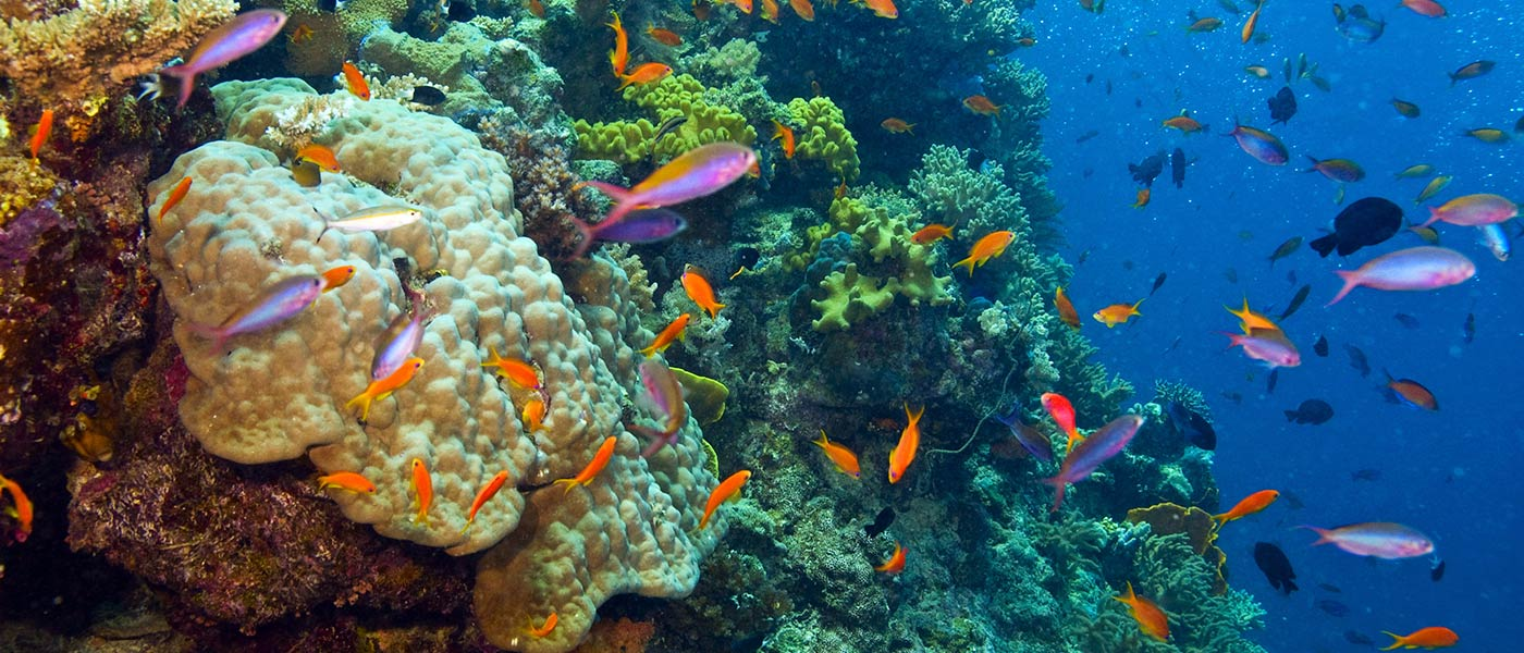Fish and coral in the Great Barrier Reef, Australia © Shutterstock / Debra James / WWF