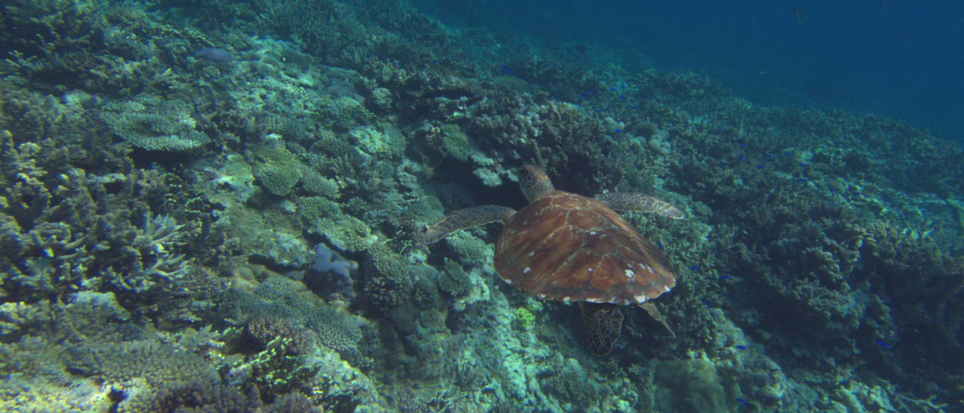 essays on marine biodiversity Dubai palm islands – essay sample wonders of nature and that such structures are not truly representative of true marine biodiversity best essay help.