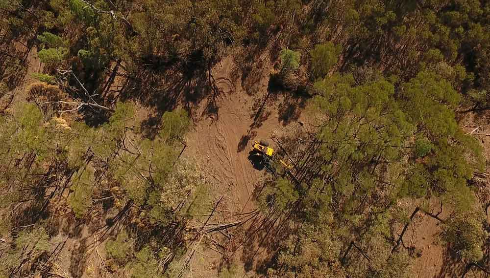 Tree thinning, Western Downs, Queensland © WWF-Aus